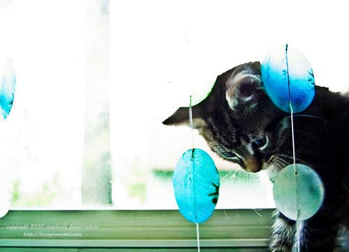 Gary the Kitten