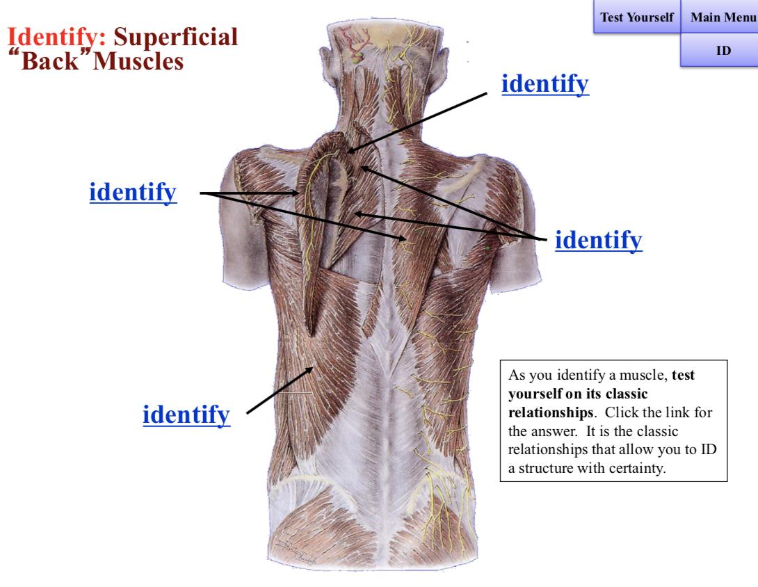 Pin By Reyman Panganiban On Anatomy In 2019 Manual Guide