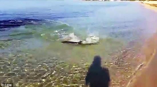 Tubarão perseguindo sua presa