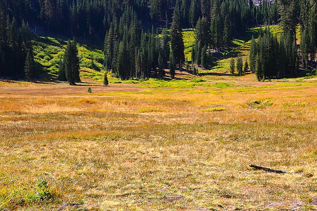 IMG_5072 Paradise Meadow, Lassen Volcanic National Park