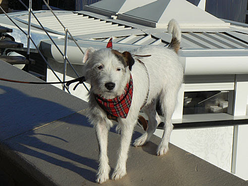 chien et bandana.jpg