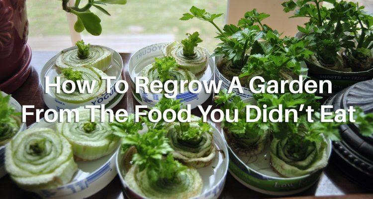 1_garden of food
