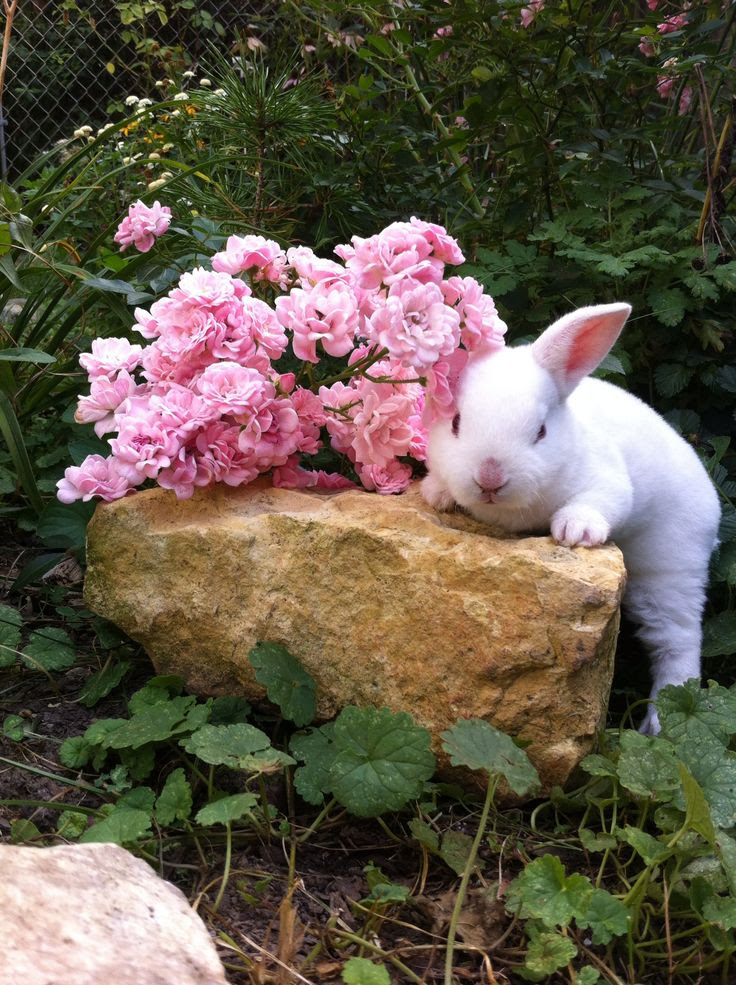 Bunny and Roses - SO CUTE!