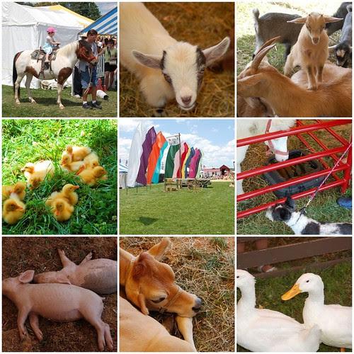 Kutztown Folk Festival Animals
