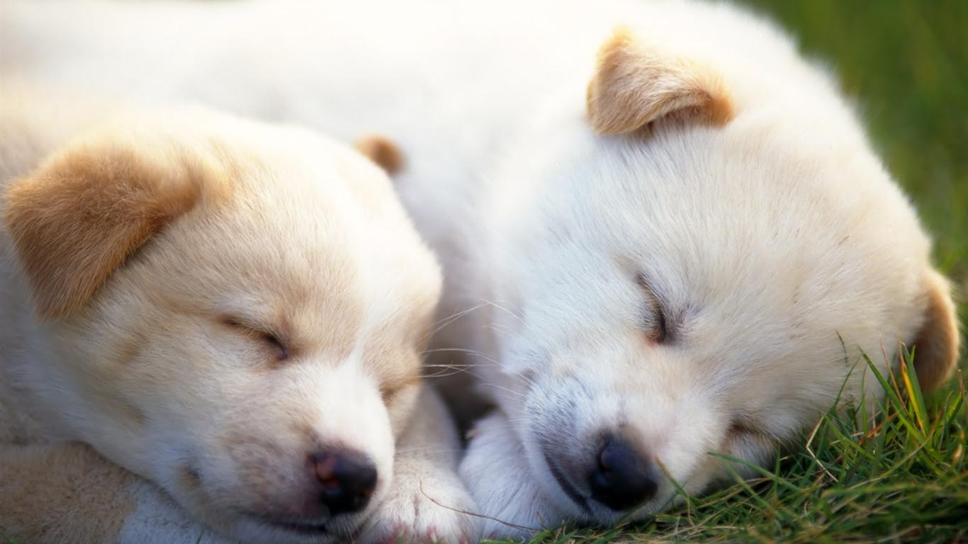 1600犬の写真の壁紙 8 16 1366x768 壁紙ダウンロード 1600犬の