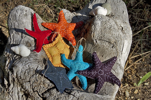 a (nearly) rainbow of sea stars