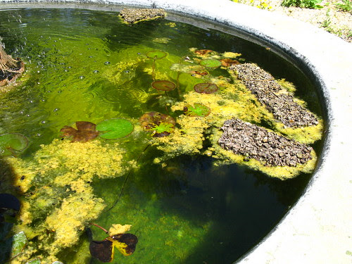 Float some cork board in your pond so the bees can land on it for a drink.