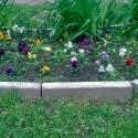 Городские цветы 1-ая часть