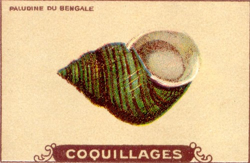 coquillages1