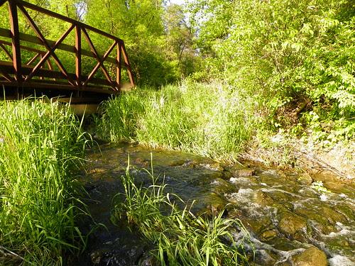 5.9.2010 Waterfall Glen Forest Preserve (7)