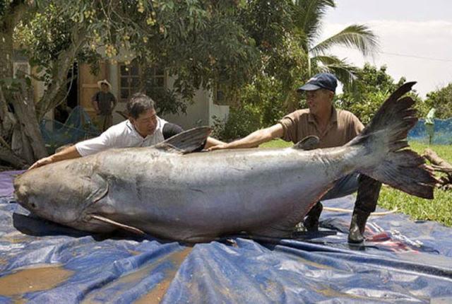 Abnormally Large Animals