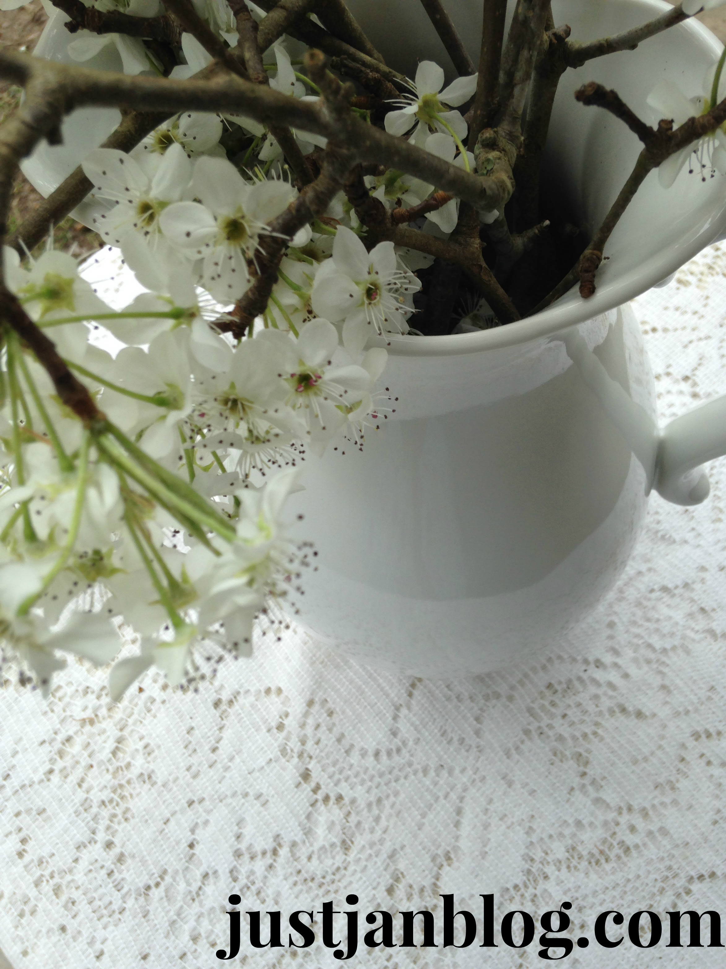 whitebradfordpear