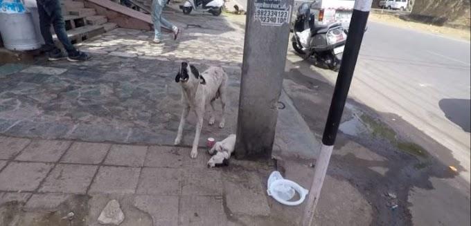 Madre desesperada grita con todas sus fuerzas pidiendo ayuda para su cachorro herido