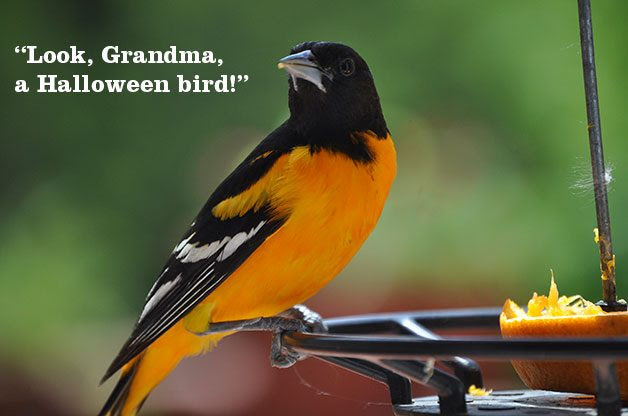 Funny Things Kids Say About Nature Birds And Blooms