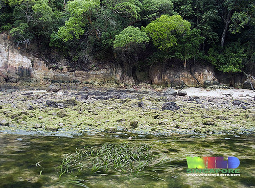 Seagrasses, rocky shores, coastal forest at Sentosa