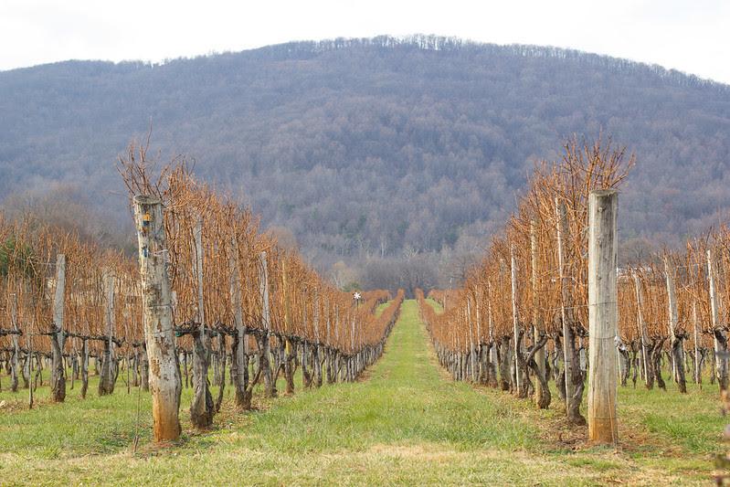 Adventures_Afton_Mountain_Winery_4