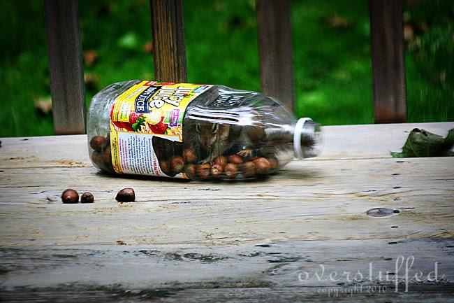 Chipmunk in a Bottle