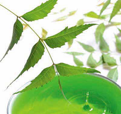 Limoncillo y Geraniol Impermeables y Sin DEET STRIR Pulseras Repelentes de Mosquitos para Adultos y Ni/ños con Citronela