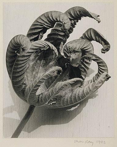 Dead Leaf, Man Ray, American, 1942, Gelatin silver print