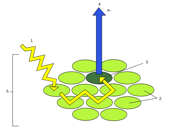 Difference Between Photosystem 1 and 2   Definition ...