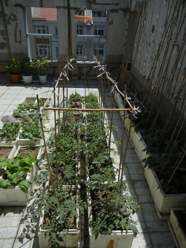 Rooftop Vegetable Garden _ 0432