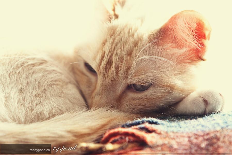 ~ 83/365 Nahla Sleeping ~