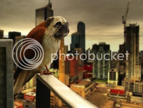 photo 08DirdsAKADogbirds_zpsc743cc8b.jpg