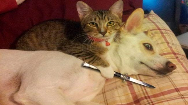 510 Koleksi Gambar Hewan Kucing Dan Anjing HD Terbaru