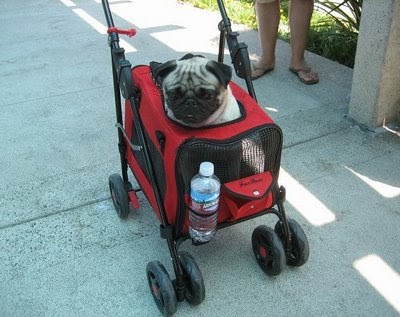 Cairo S Place Strollers For Dogs