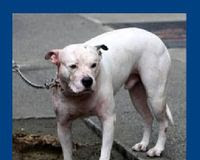 DEMAND that the AC&C and NY DOH - let Bones live!