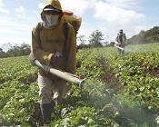 Pesticide concept