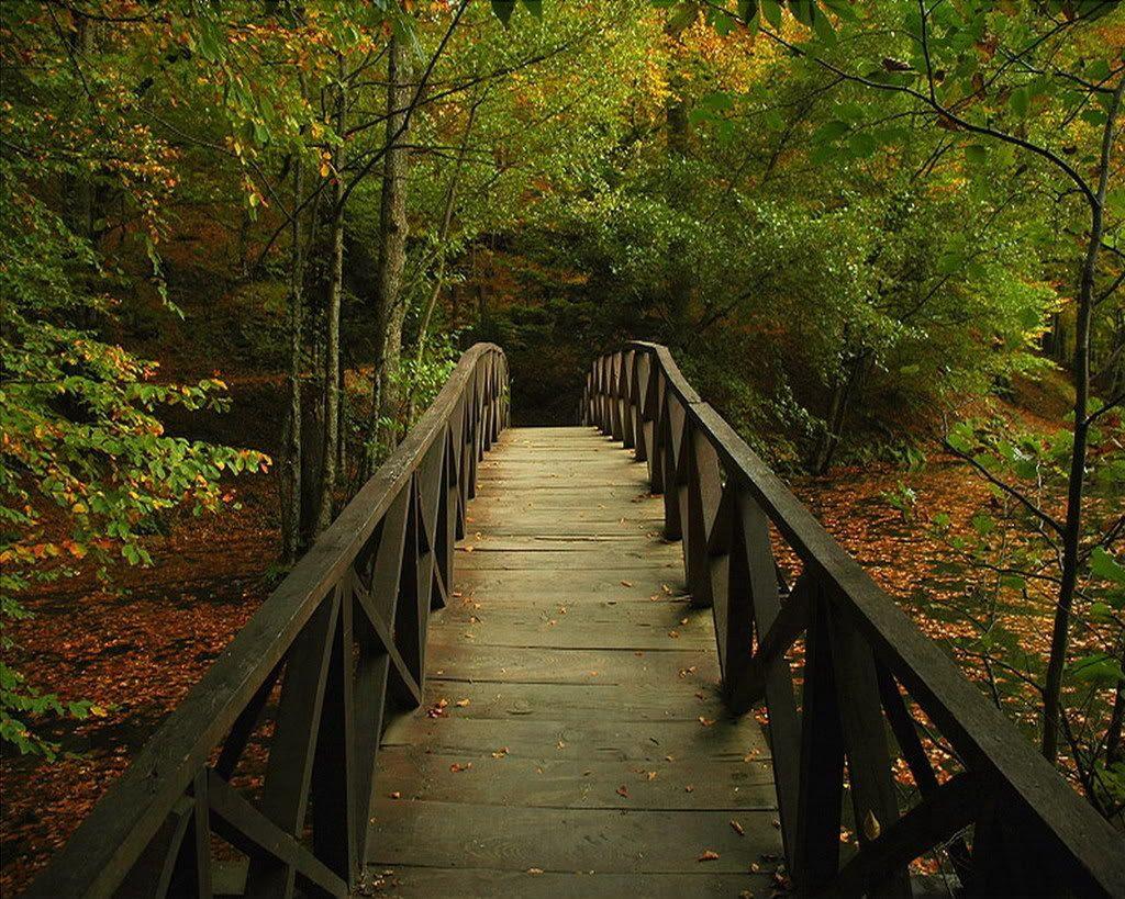 Half-Dipper Bridge