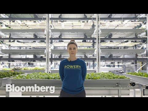 .什麼是現代智慧溫室大棚的核心競爭力?