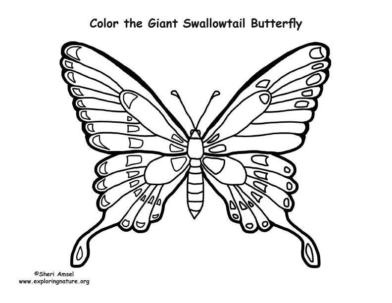 Butterfly (Giant Swallowtail) Coloring Page