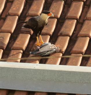 http://www.noticiasespiritas.com.br/2020/JANEIRO/04-01-2020_arquivos/image018.jpg