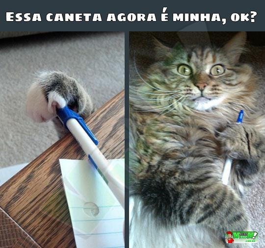 Blog Viiish - Gatos são assim