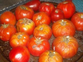 Spring Garden 2010 Tomatoes