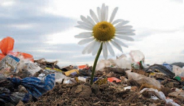 Risultati immagini per governo che non tutela l'ambiente