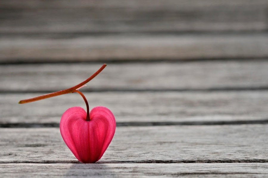 Una Flor Con Forma De Corazón 72775