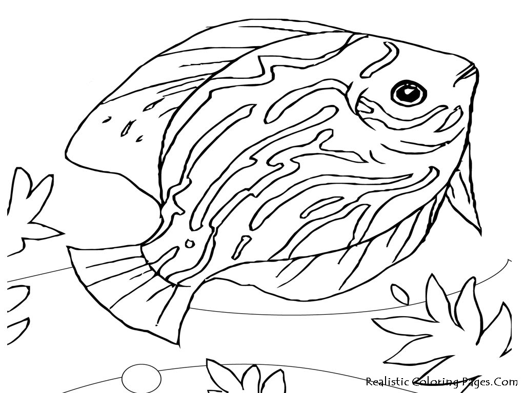 41 Top Sea Animals Coloring Pages Easy  Images