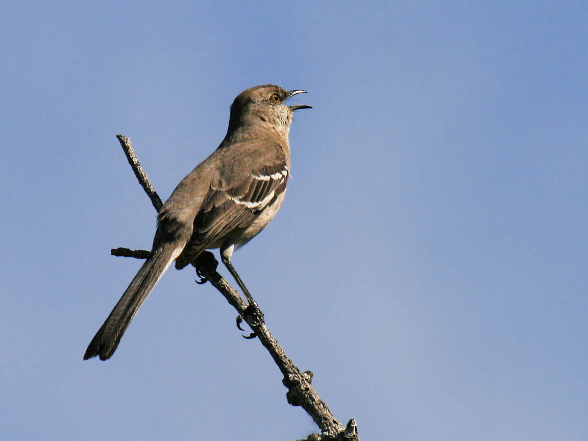 Common Backyard Birds mp3 download free forever: jersery in the winter: common backyard