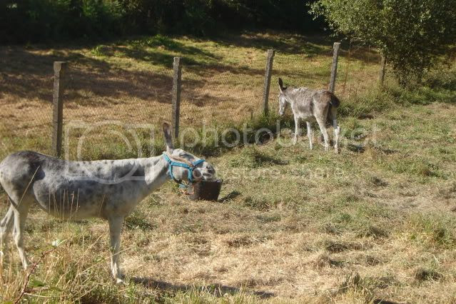 os burros