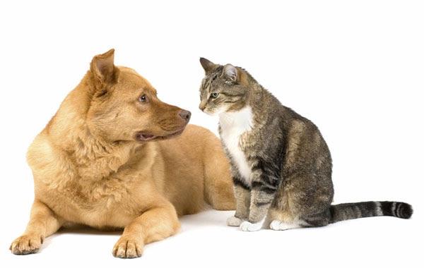 Διαγωνισμός με τρικ: Γάτα vs Σκύλου!