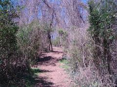 tharp trace trail