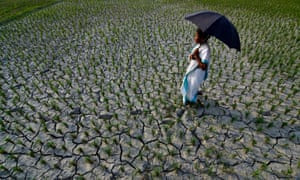 An Indian farmer inspects her agricultural field which is badly affected by the heat wave and scanty rainfall in India.