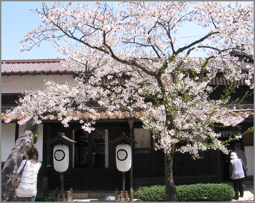 066 tree and home