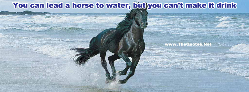 Facebook Cover Image Images In Horse Tag Thequotesnet