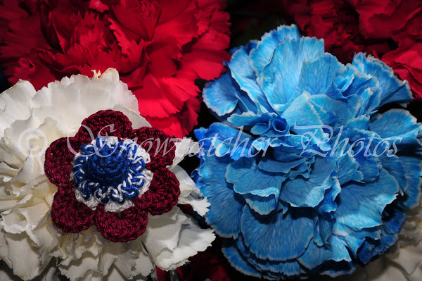 Patriotic Windflower