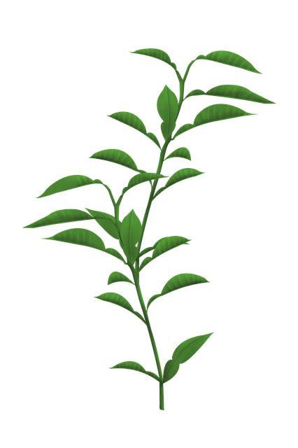 tanaman daun batang gambar gratis  pixabay