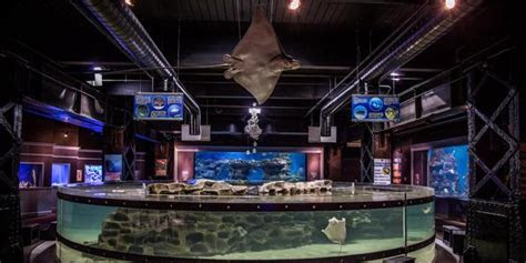 Greater Cleveland Aquarium Weddings   Get Prices for
